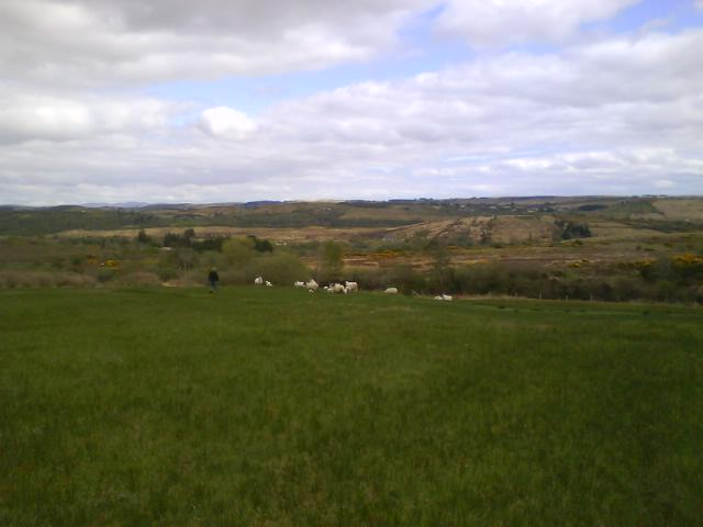 Scenic view of some of the flock