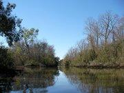 Swamp61