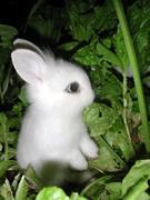 The Bunny Burgler