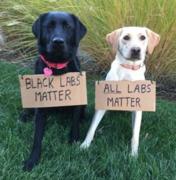 Black Lab's Matter