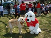 Wags and Whiskers Walkathon