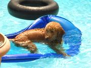 Relaxing in da pool!