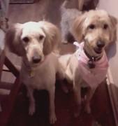 girls groomed