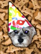 Ralphie's second birthday