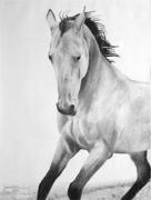 Charcoal Golden horse