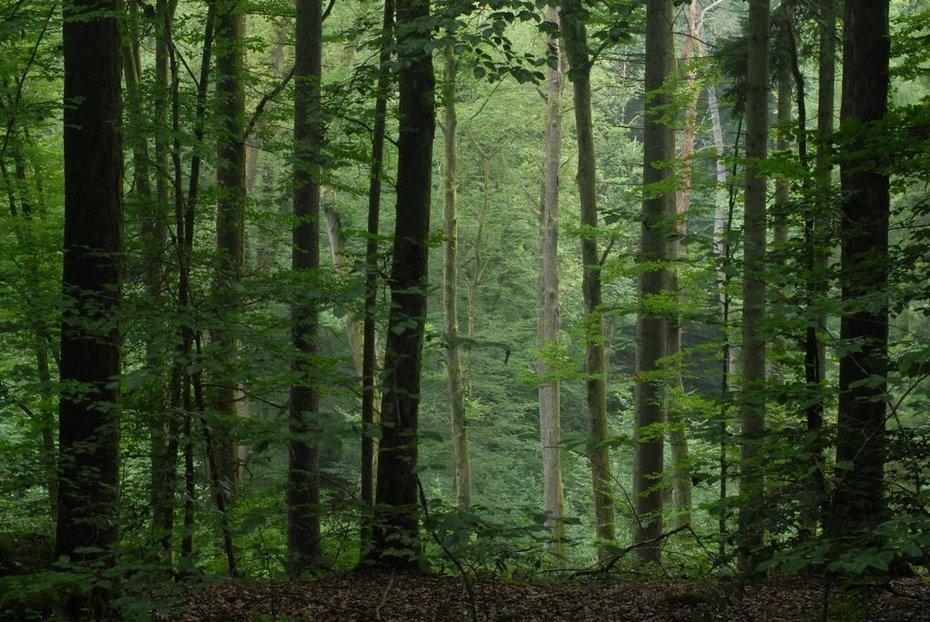 Vochtig bergbos westelijke Vogezen 30 juli 2006