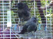 Door mij grootgebrachte vogels