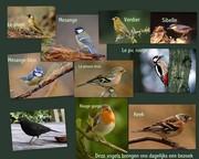 Vogels-001