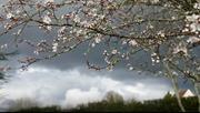 Een nieuwe lente