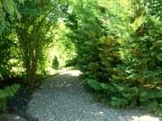 Bosgebied