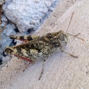 cicade (2)