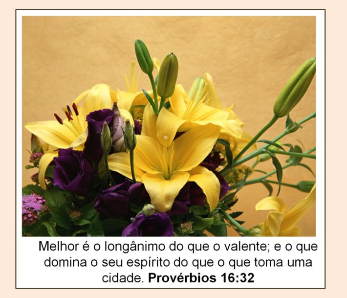 vers prov 16.32