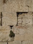 Passarinho no Muro.