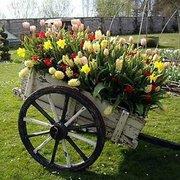 carrinho de flores
