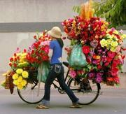 bicicleta de flores