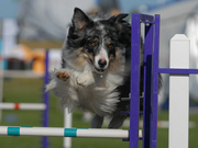 Agility Pictures