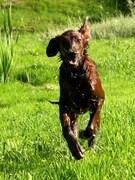 Running to give a huge hug