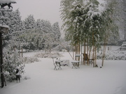 setter in our wintergarden ??