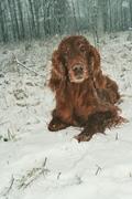 Kruszyna is 9 years old (28.12.09)