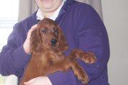 Puppies 09 082