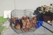 Puppies 09 064