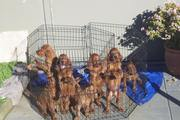 Puppies 09 065