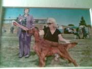 Dudley winning puppy in show