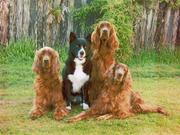 family portrait (dogs)