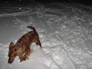 Lekker happen in de sneeuw