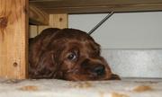 Puppies 2010 - part 2