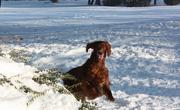 winter sweet Conni
