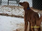 Molly's Snow Day 2-1-2011