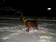 Molly's Snowy Night Walk 3-26-2011