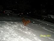 100_1607 Molly Running in Snow 3 26 2011
