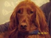100_1542 Molly headshot 2 3 2011