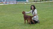 CAC Ustka 29.05.2011  - first dog show