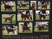 National Gundog Show