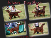 Bakewell Show photos