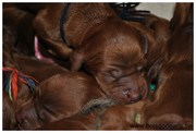 Puppies from birth to departure to new home