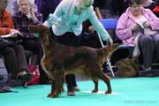 Forfarian Caught You Lookin JW ( Darcy ) Crufts 2012