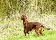 Keilynn of McBirdy - Training on fields - 8/4/2012