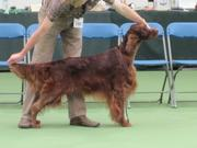 SOUTH OF ENGLAND CHAMPIONSHIPSHOW 15/07/2012