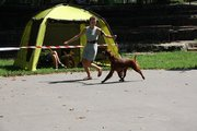 Run babe run :)