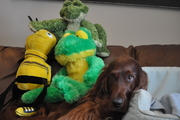 Bailey With His Friends