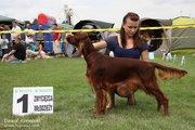 Mysterious Spring Spirit - National Dog show in Bedzin (Poland)
