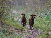 girls enjoying forest walk