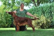 multi Ch. Loving Red Jacinta Rubin,almost 4 years