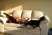 very lazy day