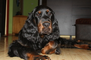 Larson Black Ivy - 5 months