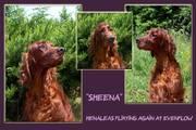 my lovely girl , Sheena